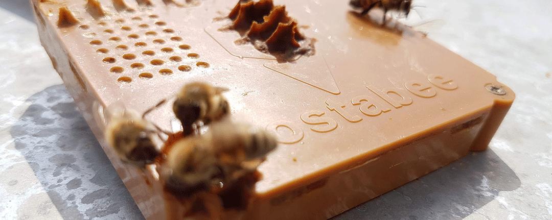 Hostabee, une startup 100% Made in Hauts-de-France