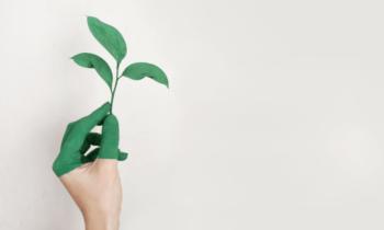 Appel à Manifestation d'Intérêts : Projets innovants dans la bioéconomie